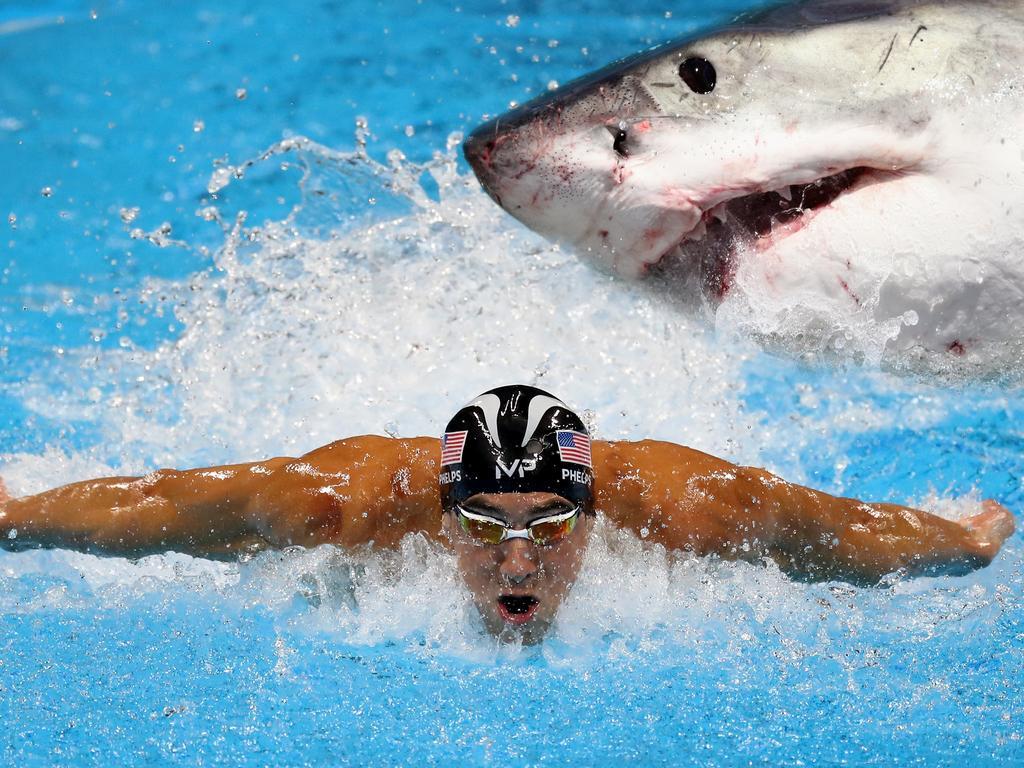 Rekord-Olympiasieger Phelps schwimmt gegen Weißen Hai class=