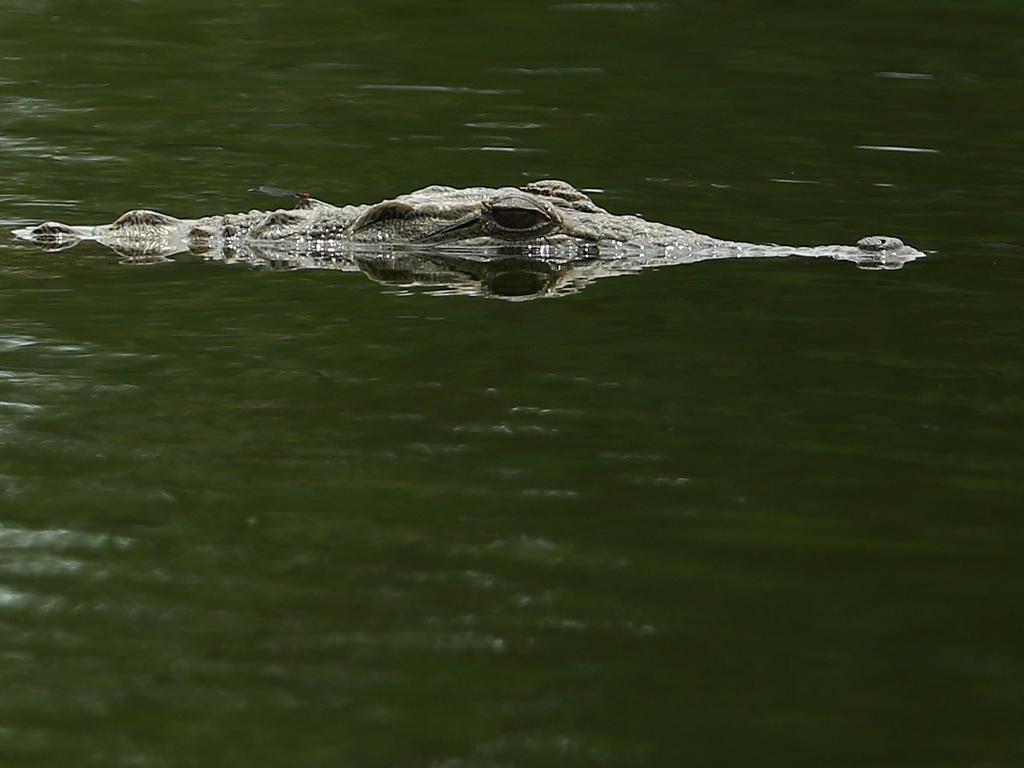 Todavía buscan el cuerpo de la víctima tras el ataque del cocodrilo. (Foto: Getty)
