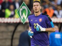 Werder hat Jiří Pavlenka verpflichtet