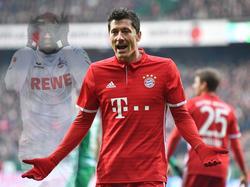 Bayern-Stürmer Lewandowski sieht keinen Vorteil für sich gegenüber Kölns Modeste
