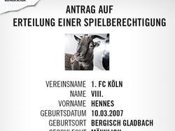 Maskottchen Hennes VIII. soll den 1. FCKöln retten (Bildquelle: twitter.com/fckoeln)