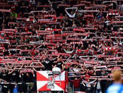 Rot-Weiß Erfurt will Rechtsmittel gegen Lizenzauflagen einlegen